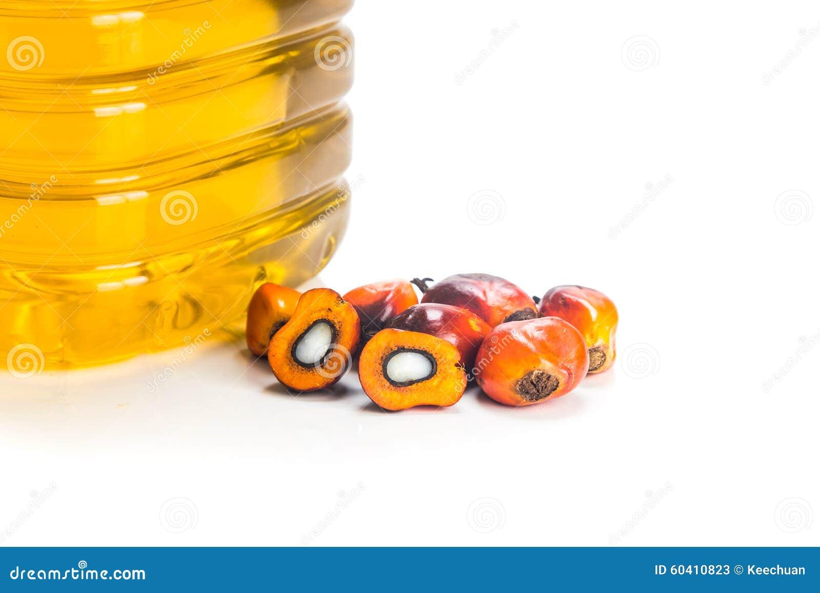 在瓶的被提炼的棕榈油有新鲜的油棕榈树的结果实