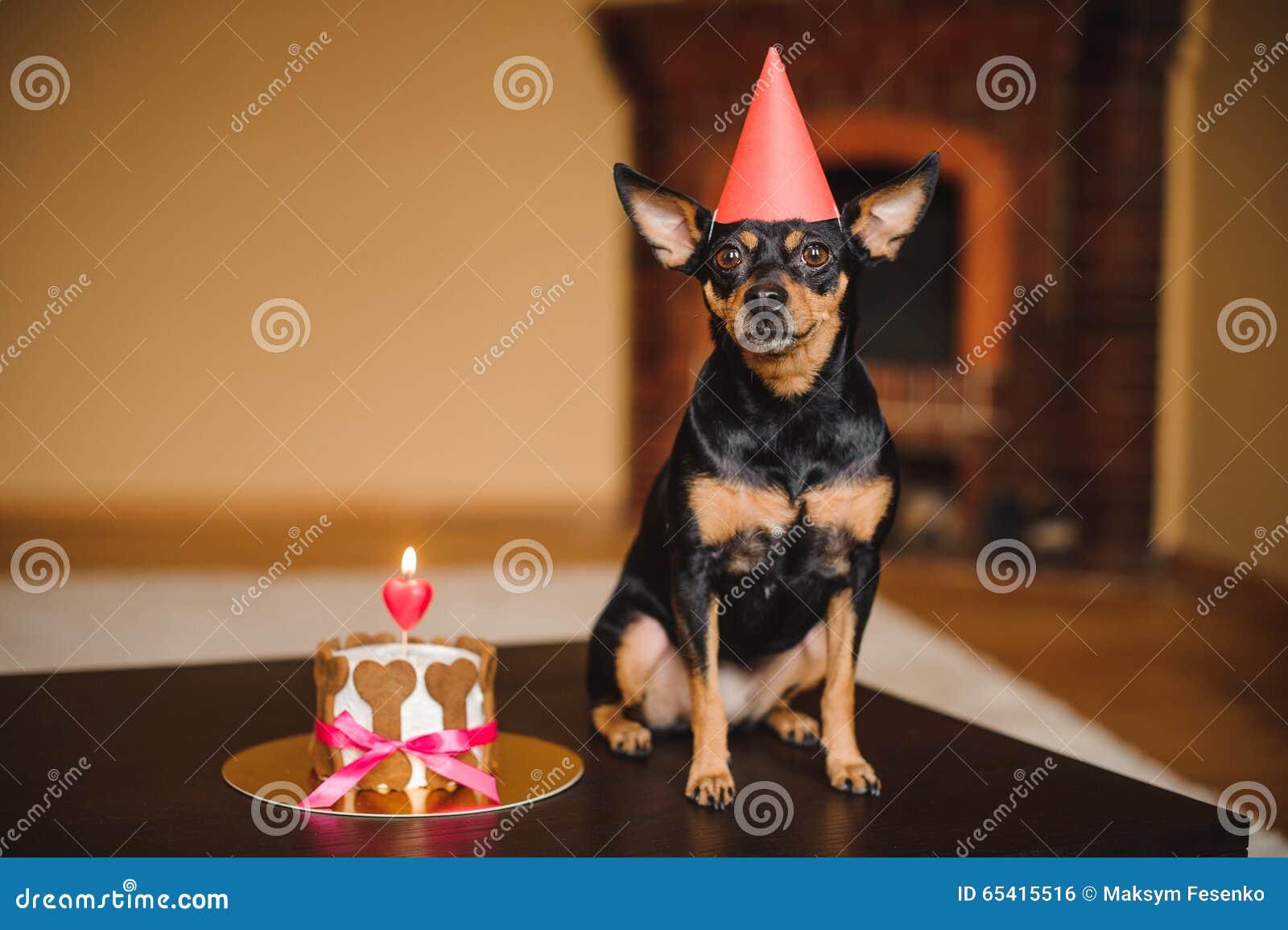 在生日帽子的玩具狗有狗蛋糕的