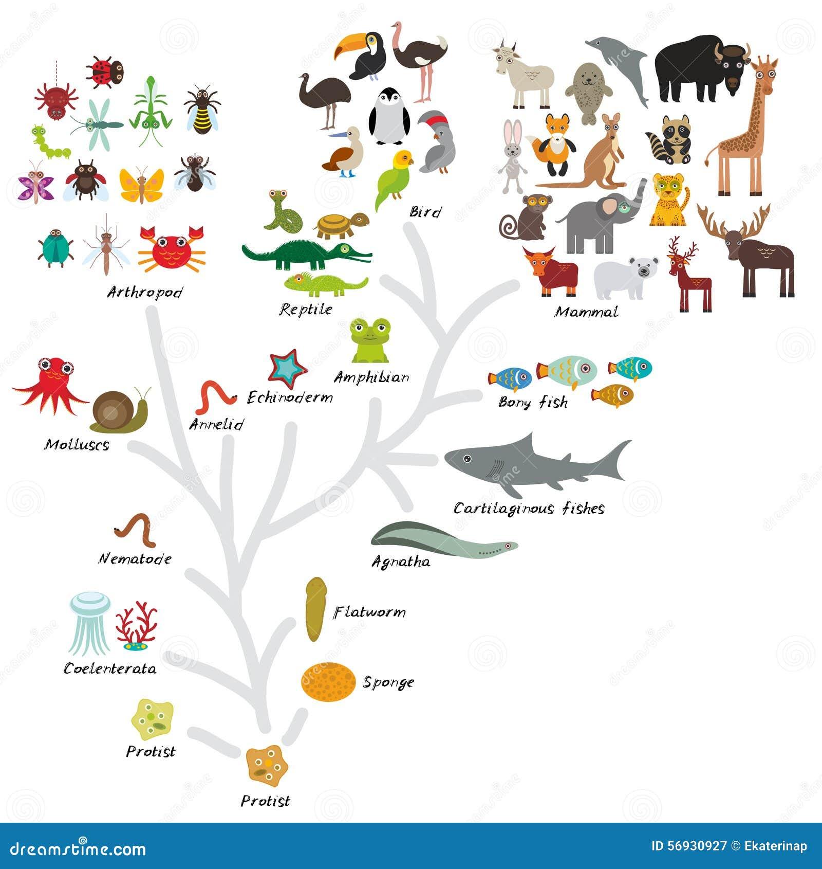 在生物的演变,在白色背景隔绝的动物计划演变  儿童的教育,科学 演变标度为