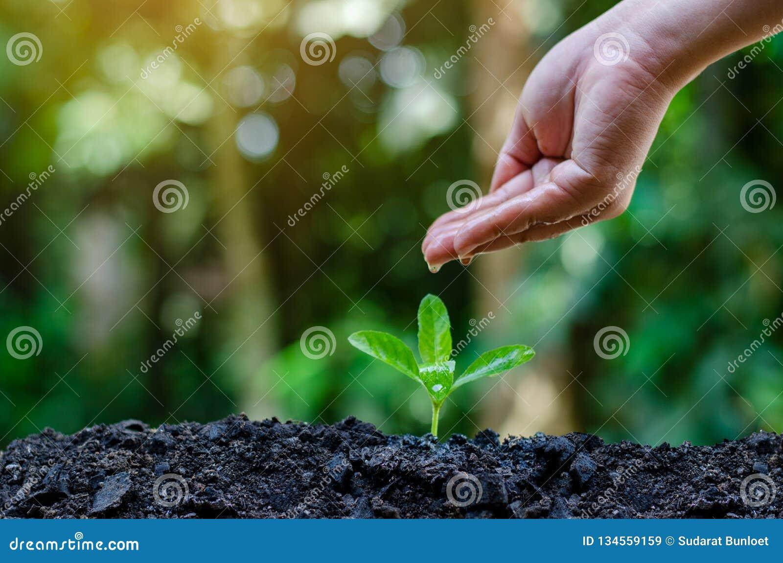 在生长幼木的树的手上 Bokeh绿化拿着在自然领域草森林保护的背景女性手树