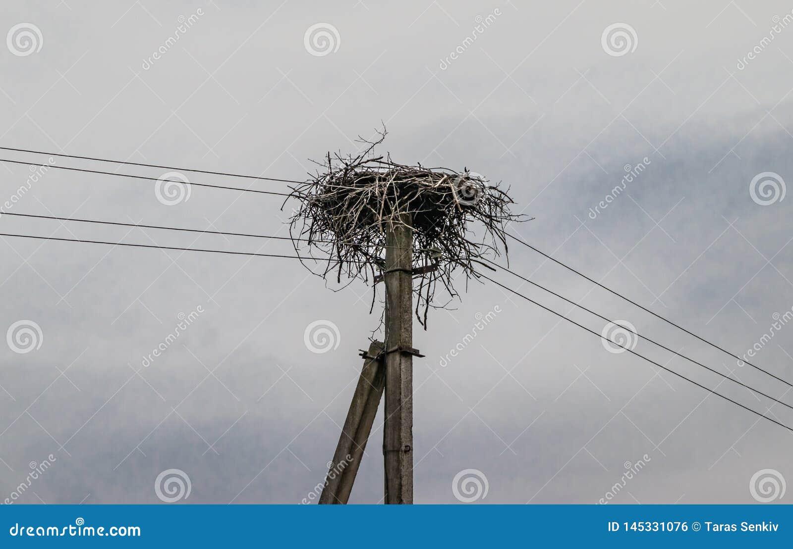 在电杆的鹳巢