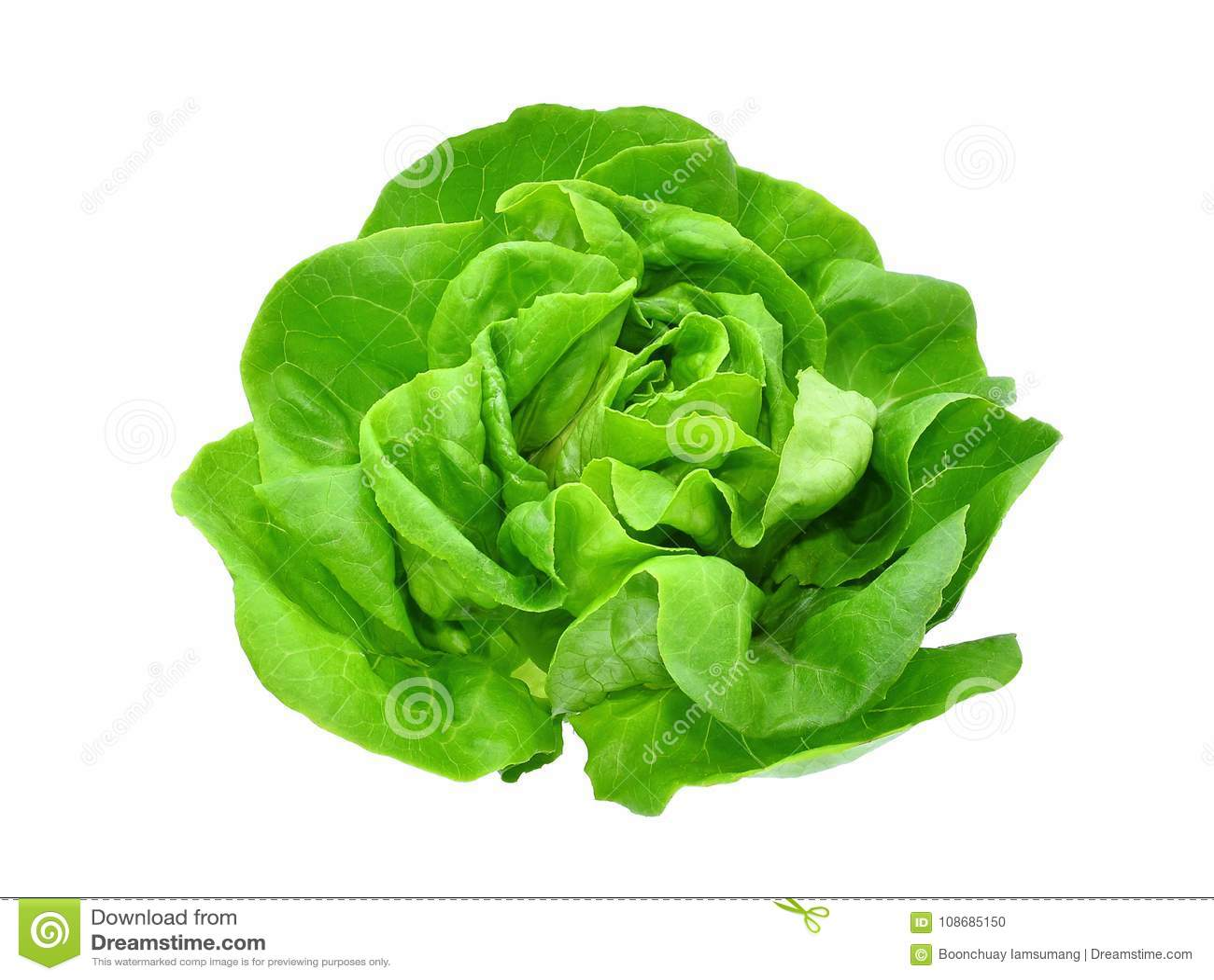 在白色或沙拉隔绝的绿色黄油莴苣菜