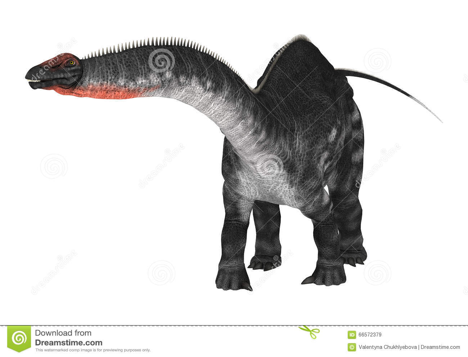 在白色的恐龙雷龙属