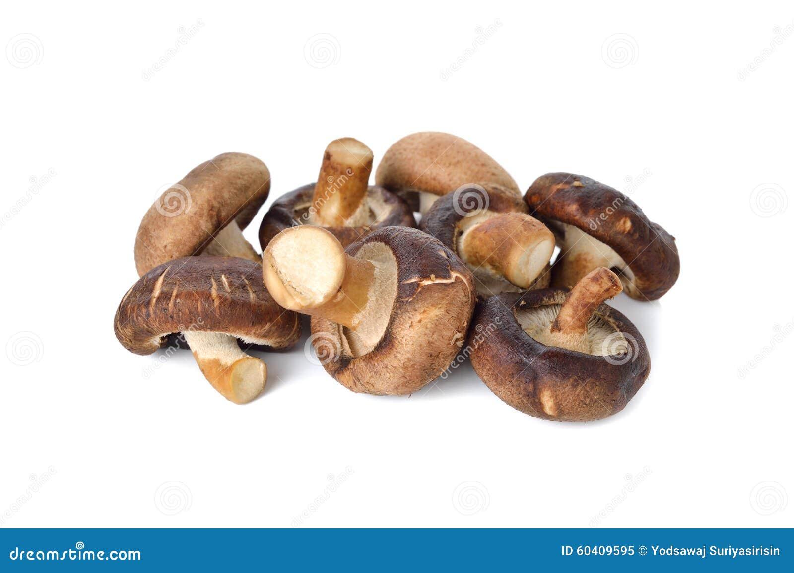 在白色的新鲜的什塔克菇