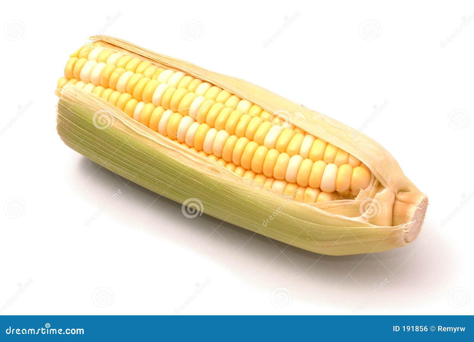 在白色的玉米