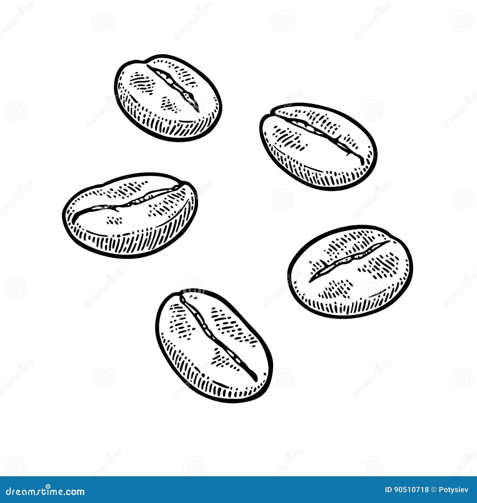在白色的豆早餐咖啡理想的查出的宏指令 手拉的剪影样式 葡萄酒传染媒介板刻
