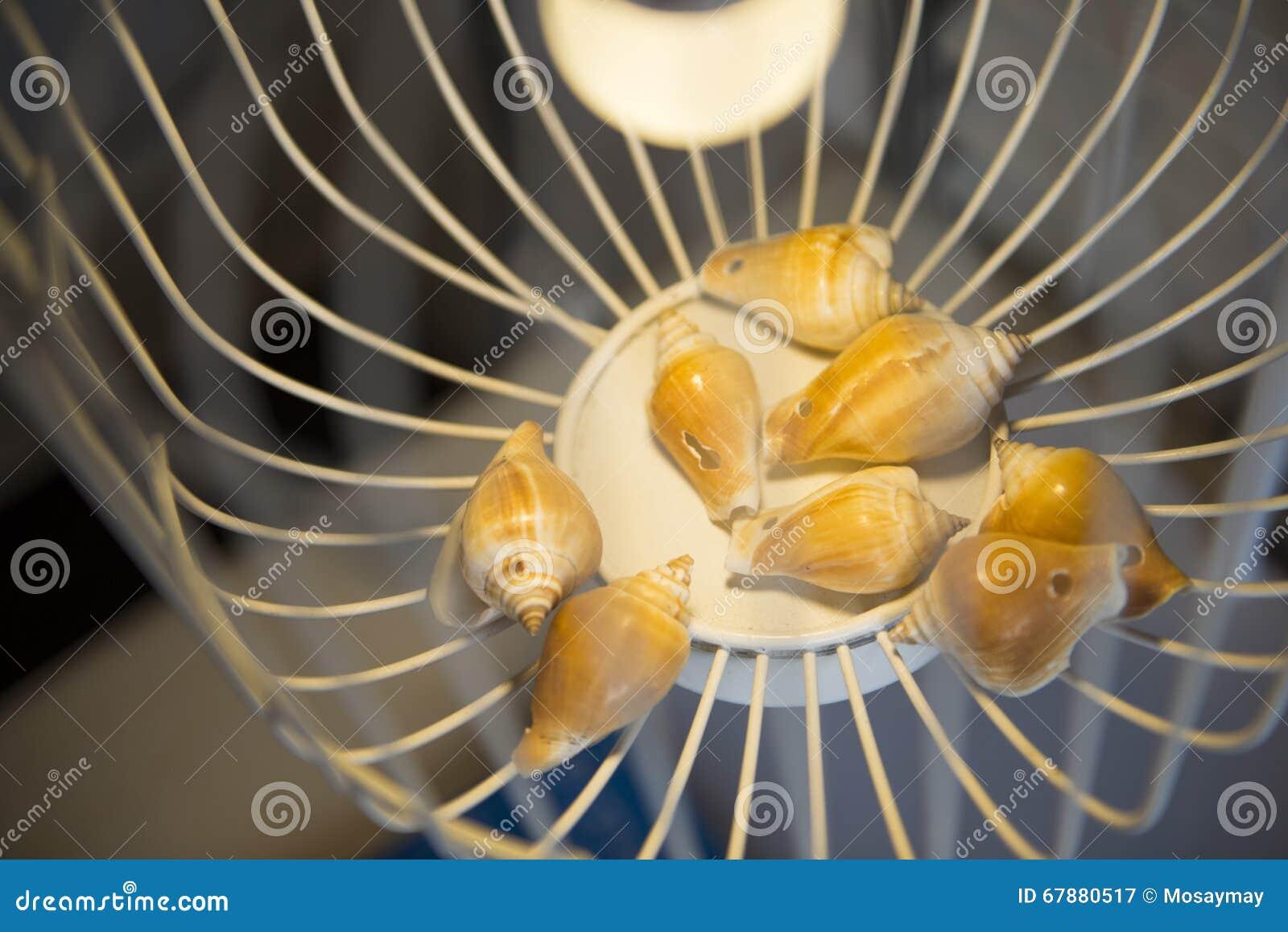 贝类在白色笼子的巧克力精炼机装饰