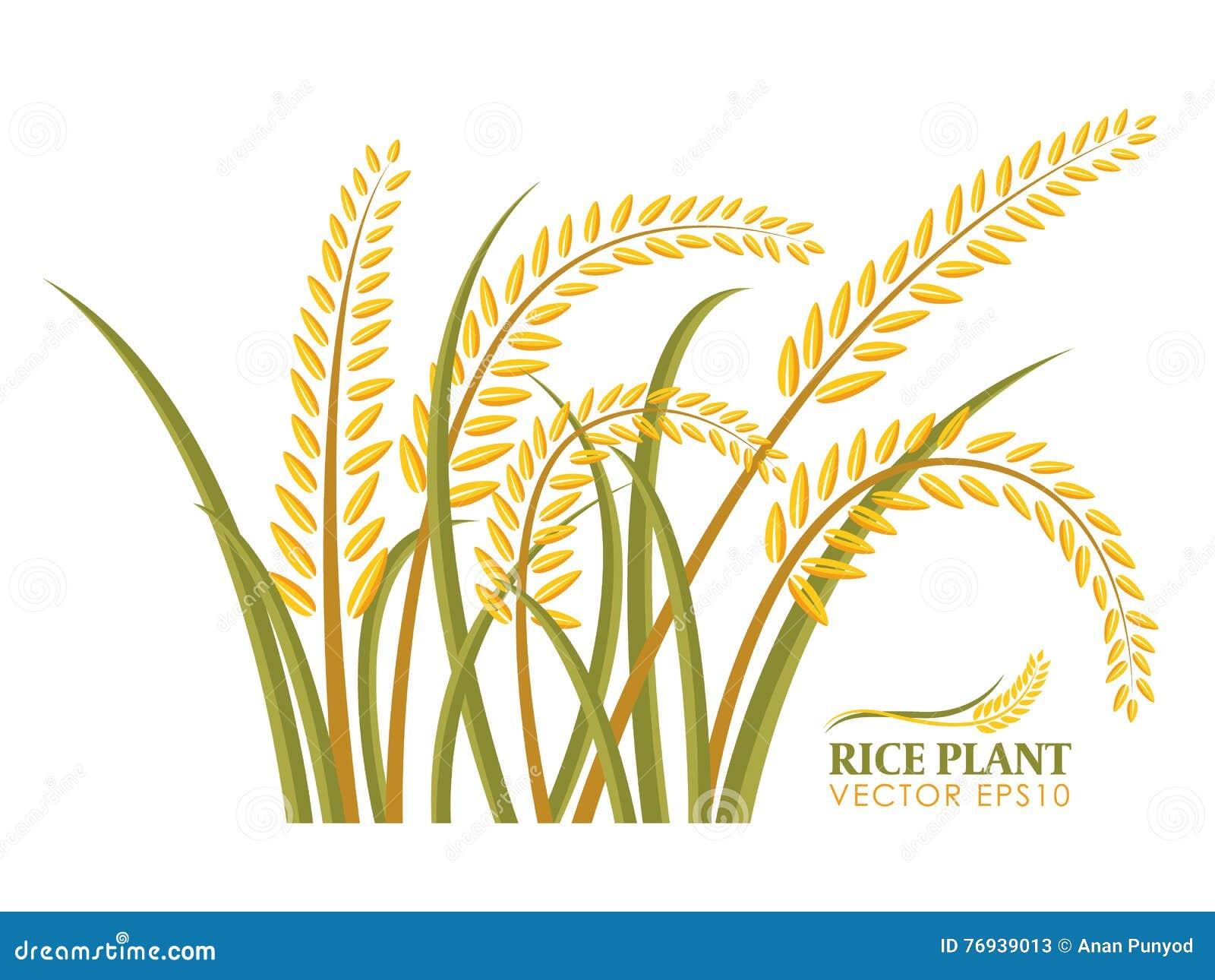 在白色背景传染媒介设计的粮食作物孤立