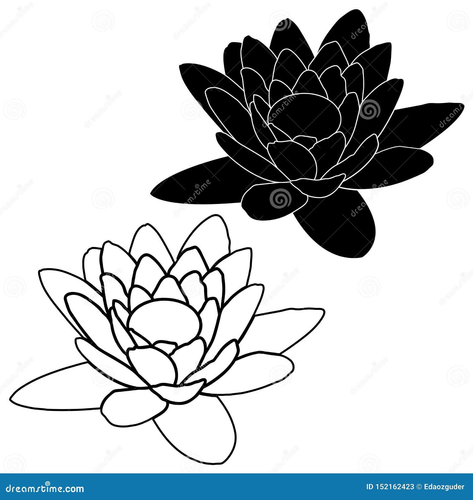 在白色背景在动画片样式的桃红色莲花隔绝的
