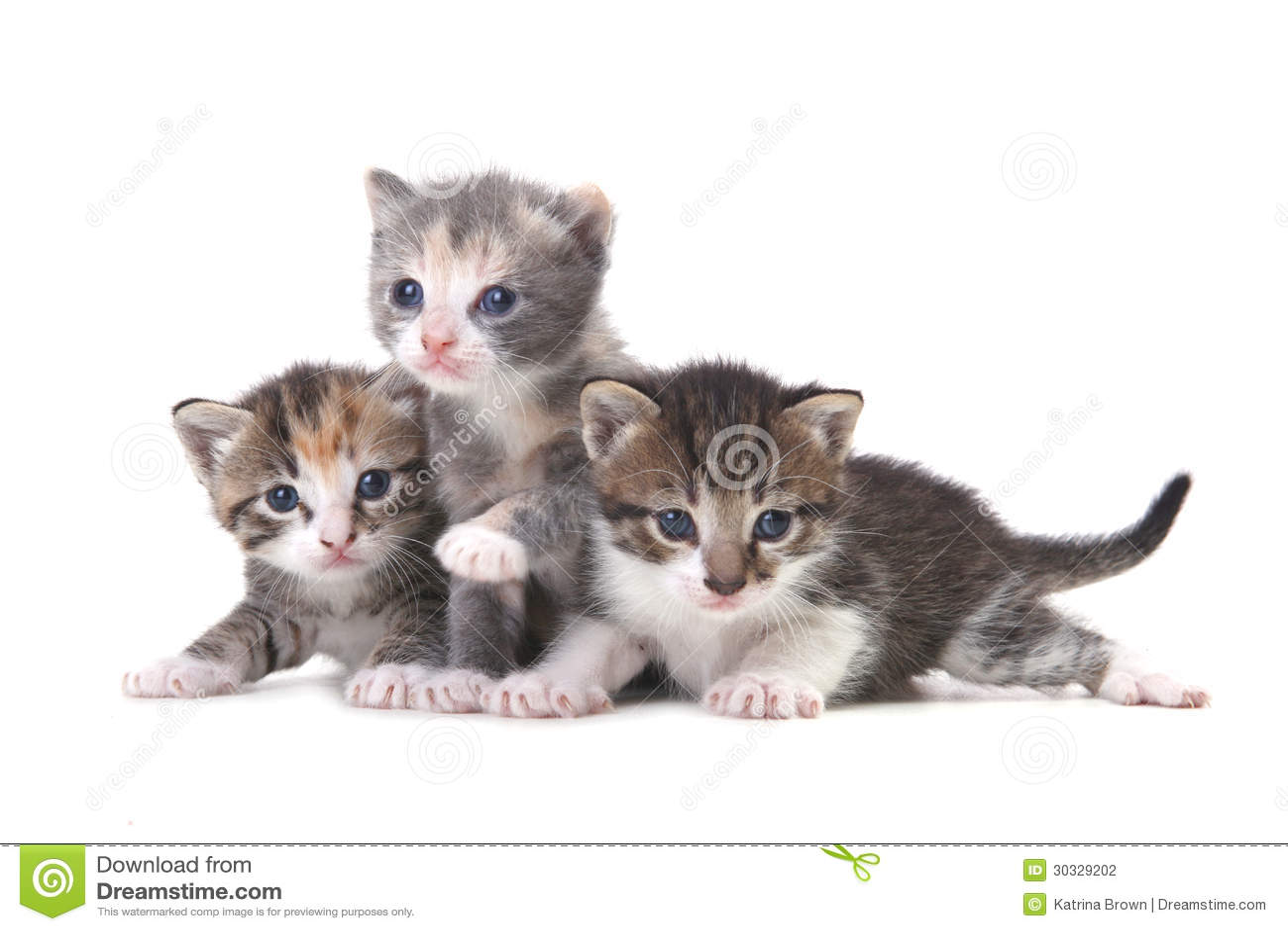 在白色背景的三只小小猫