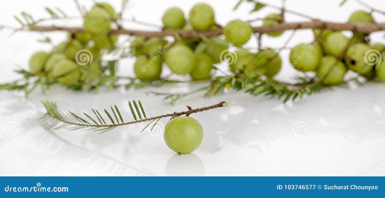 在白色背景的印地安鹅莓