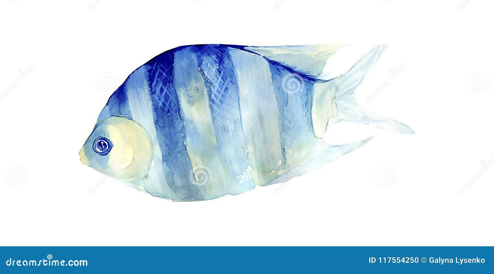 在白色背景的热带鱼 多孔黏土更正高绘画photoshop非常质量扫描水彩