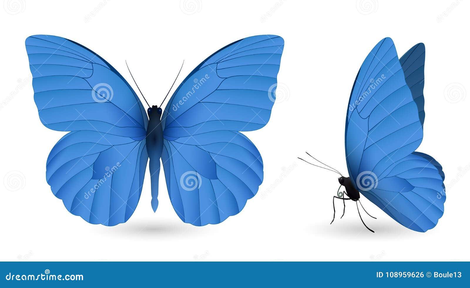 在白色背景隔绝的套蝴蝶