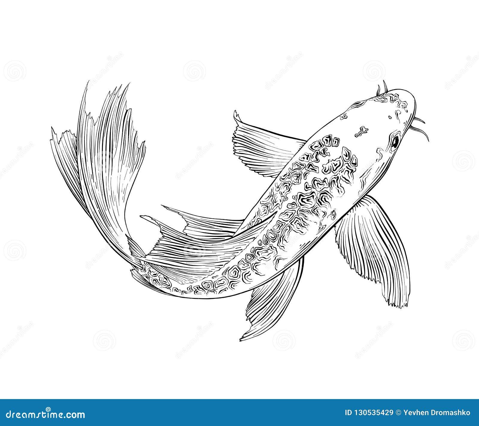 在白色背景隔绝的日本鲤鱼鱼手拉的剪影  详细的葡萄酒蚀刻图画