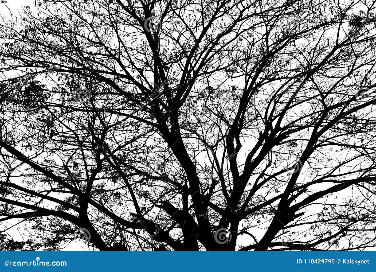 在白色背景隔绝的树剪影