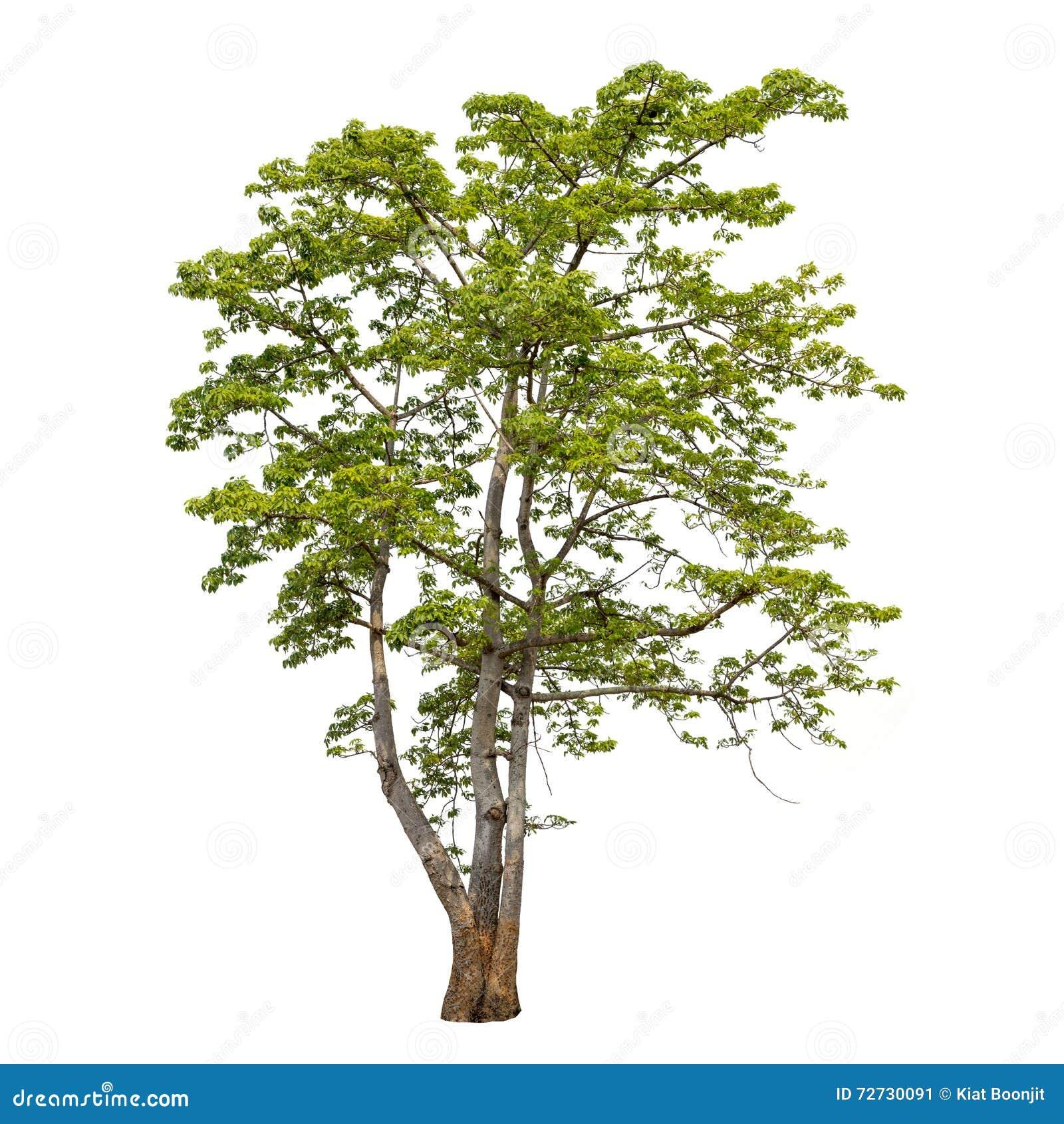 在白色背景隔绝的树的汇集