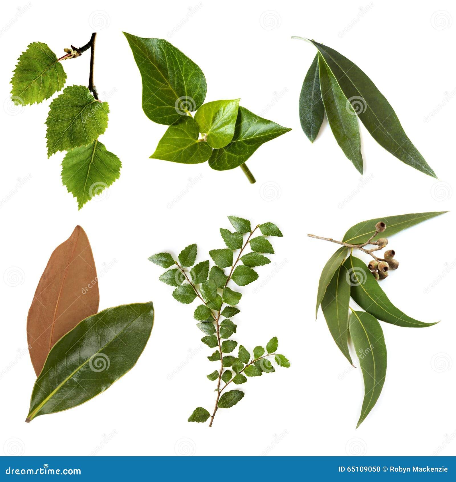 背景 壁纸 绿色 绿叶 树叶 植物 桌面 1300_1390图片