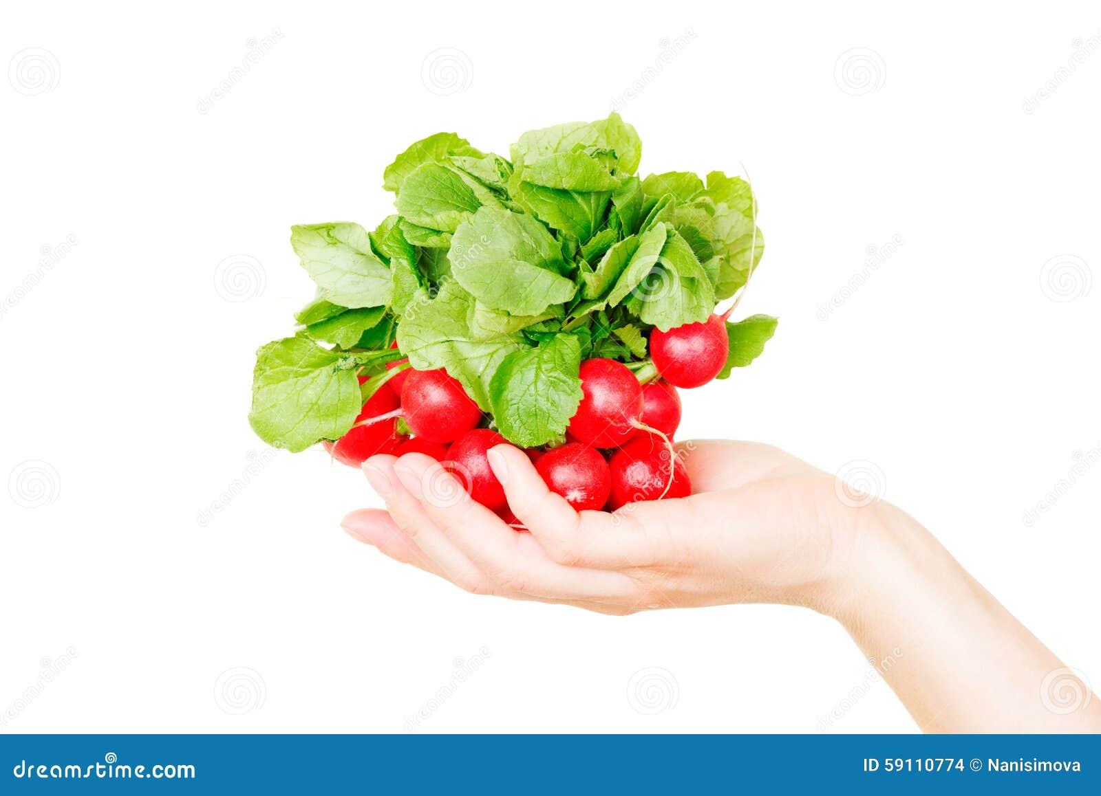 在白色隔绝的红色萝卜在人的手上
