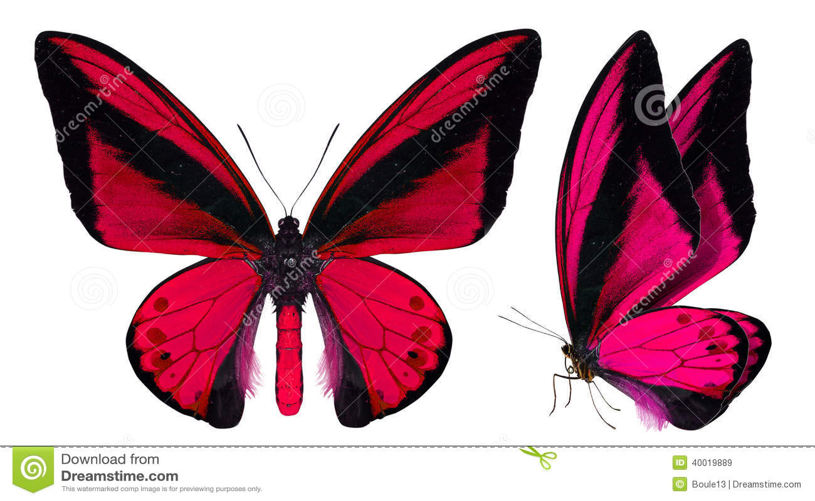在白色隔绝的美丽的蝴蝶