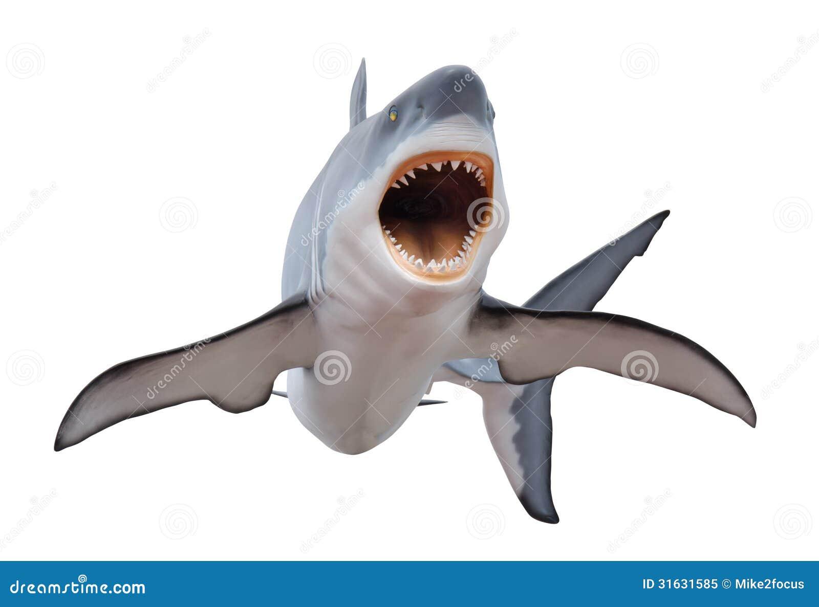 在白色isloated的剧烈大白鲨鱼