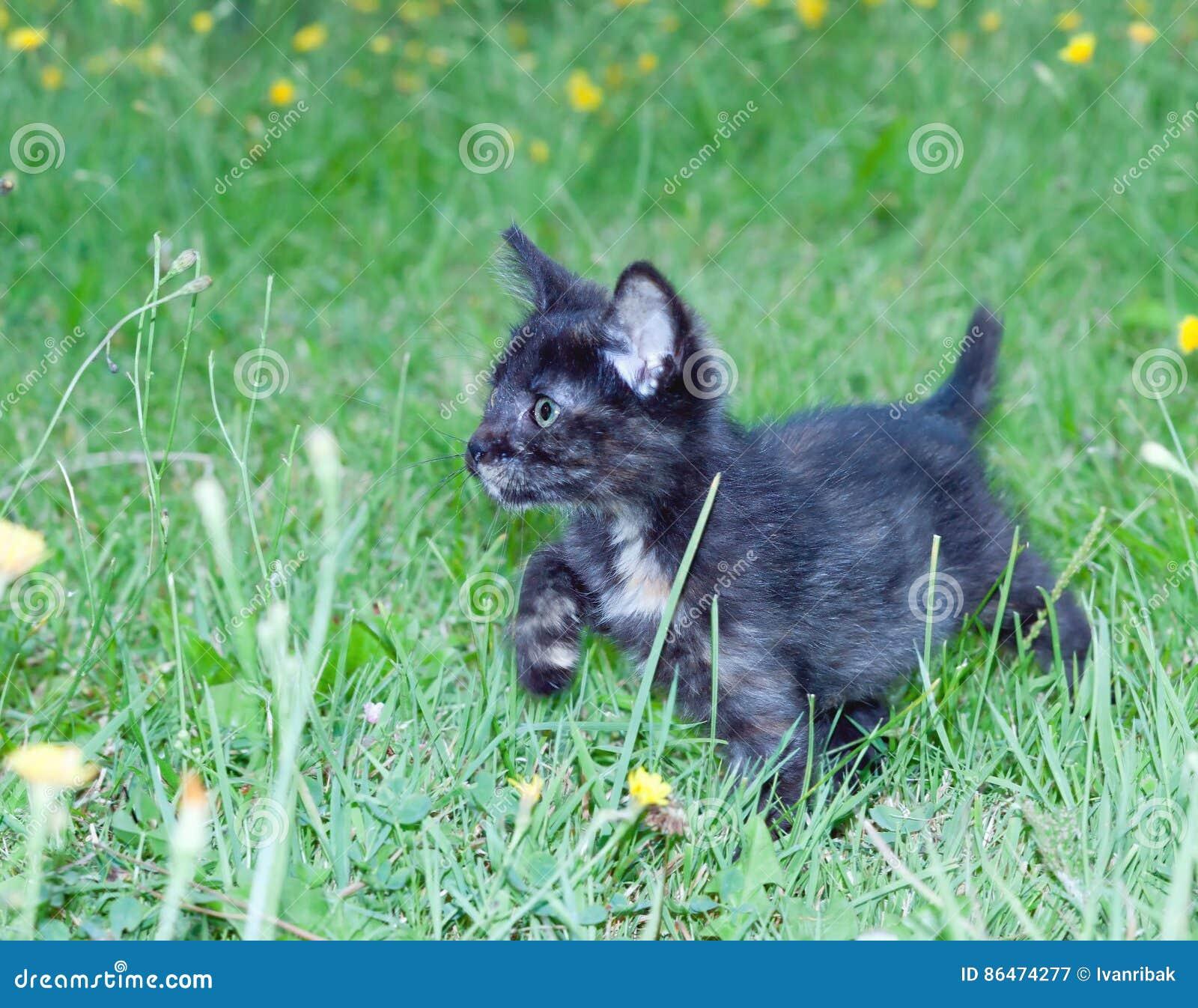 在的笨拙的小的小猫