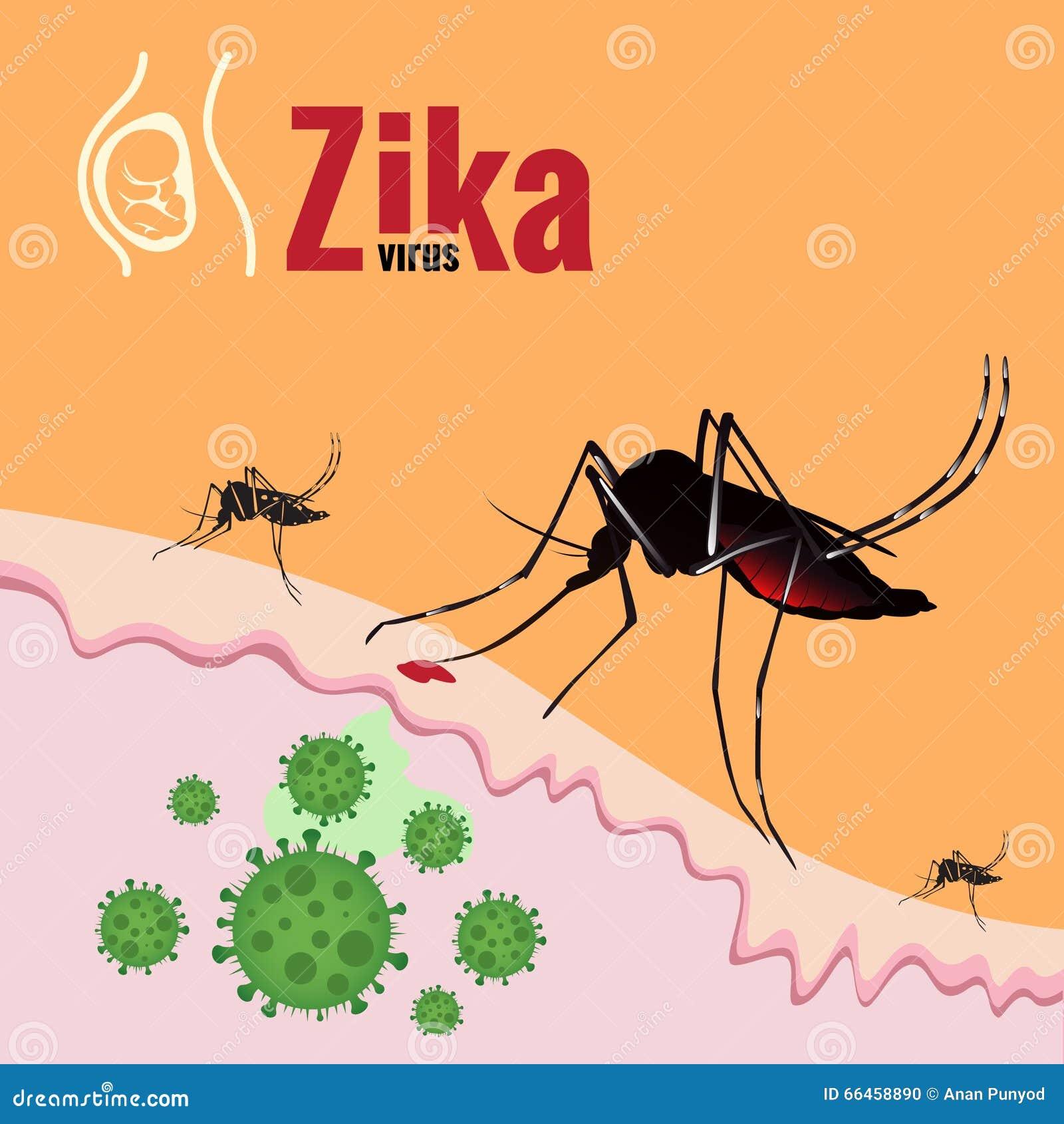在皮肤的zika病毒爆发和蚊子吮的血液.