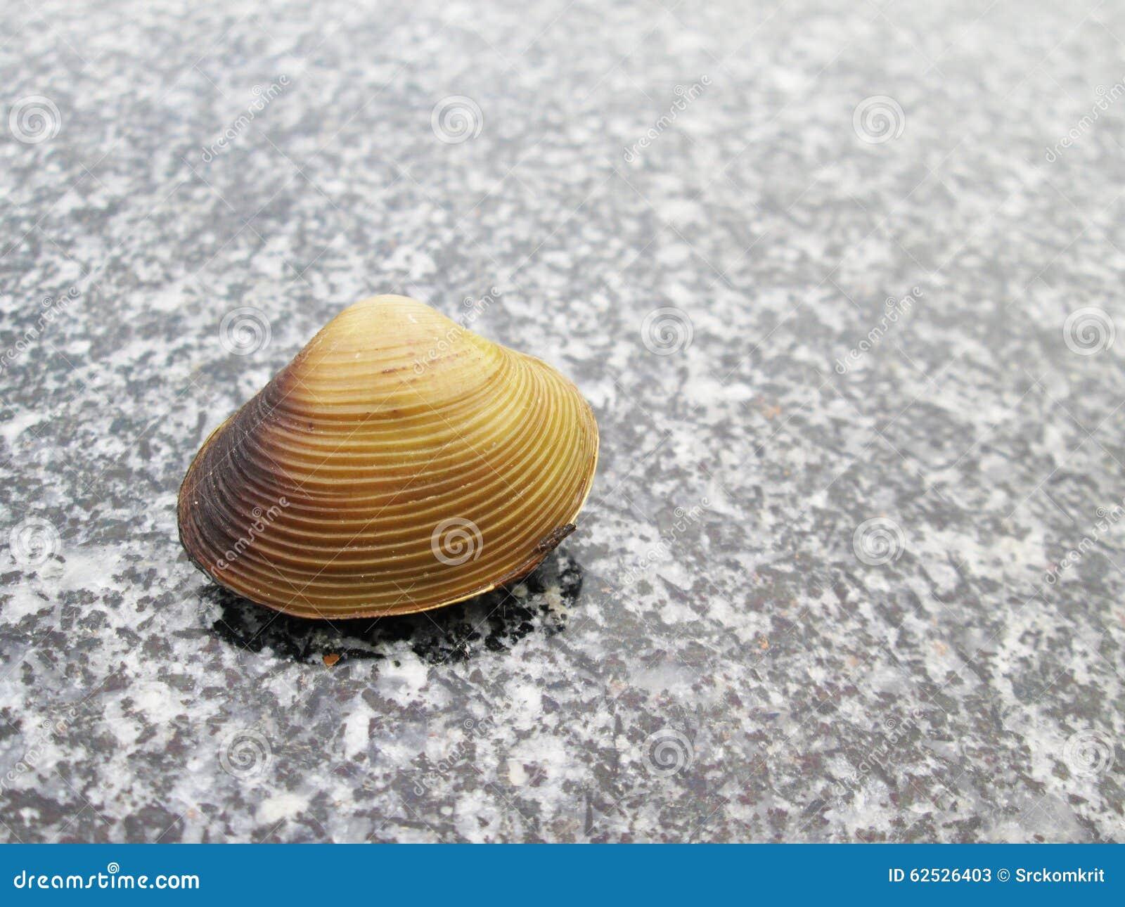 在石地板上的壳