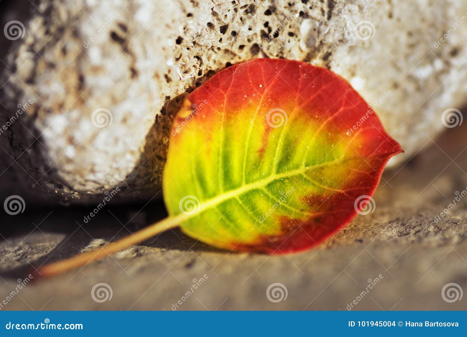 在石头和沙子的五颜六色的叶子