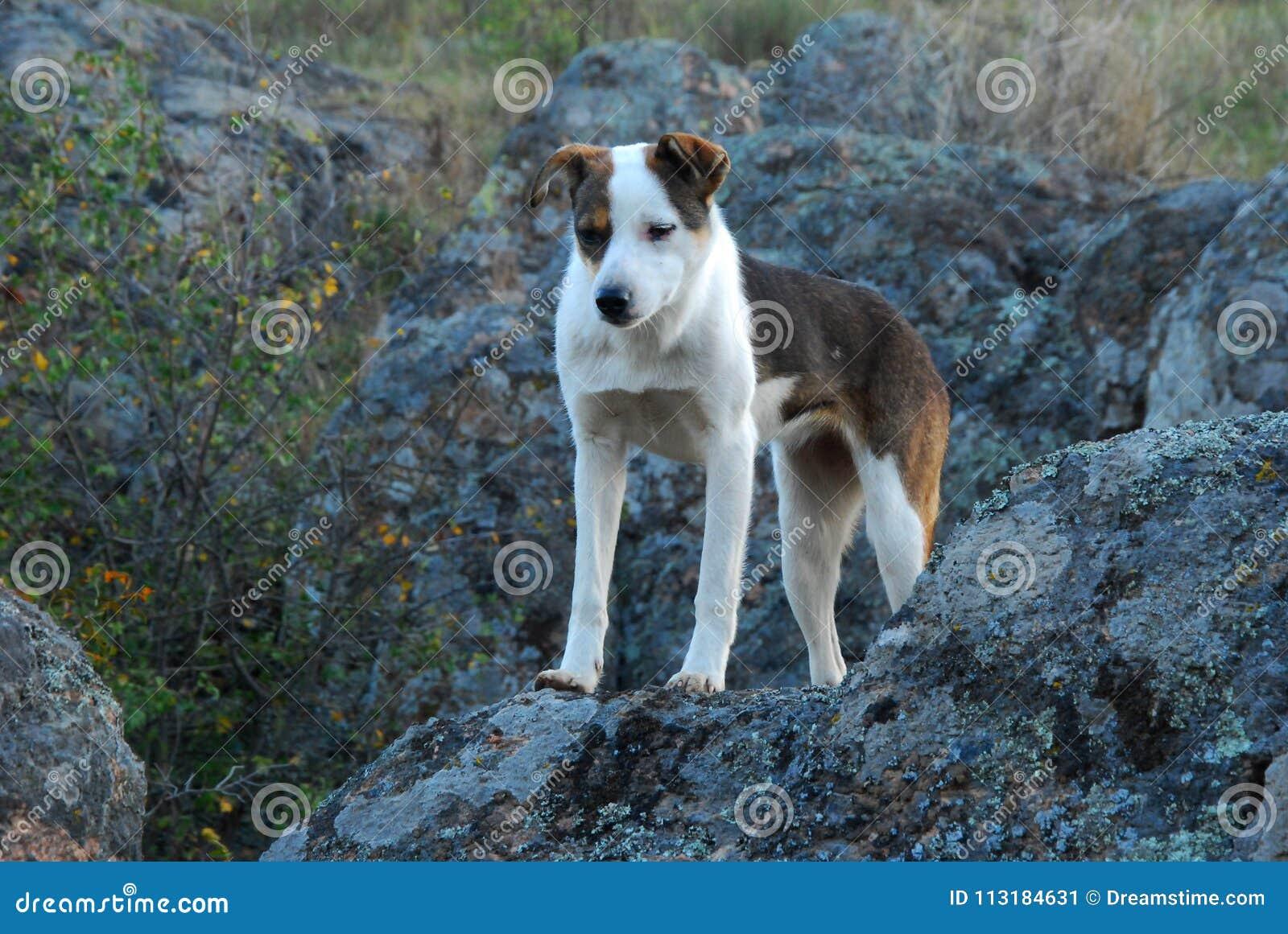 在石头的白色红色狗