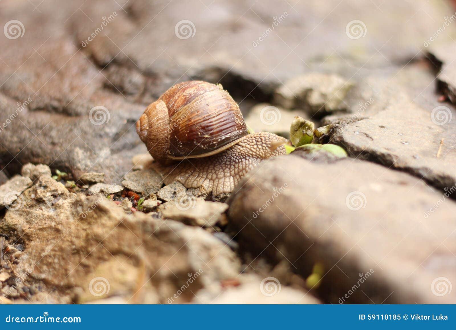 在石头的蜗牛
