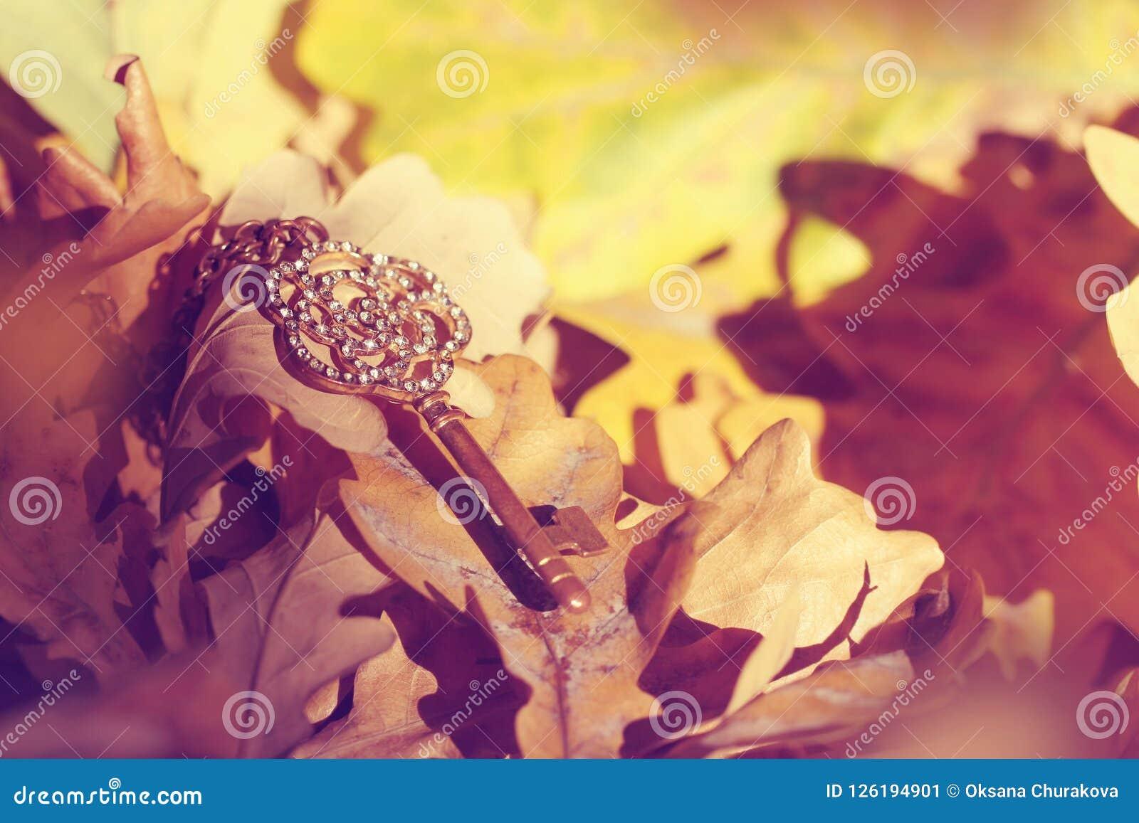 在秋天森林里丢失的古金色钥匙