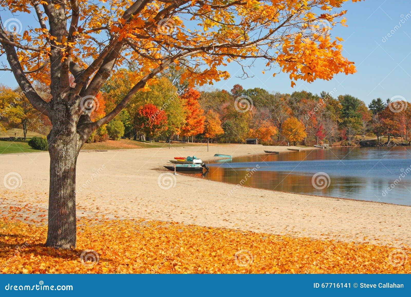 在秋天的糖槭树在湖边缘