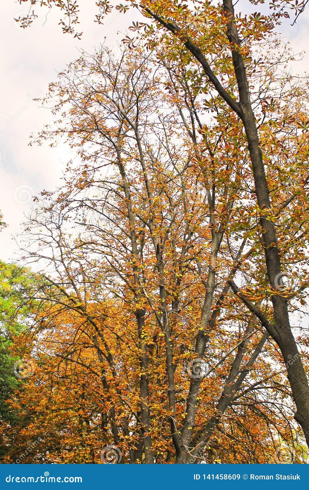 在秋天的美丽的黄色树