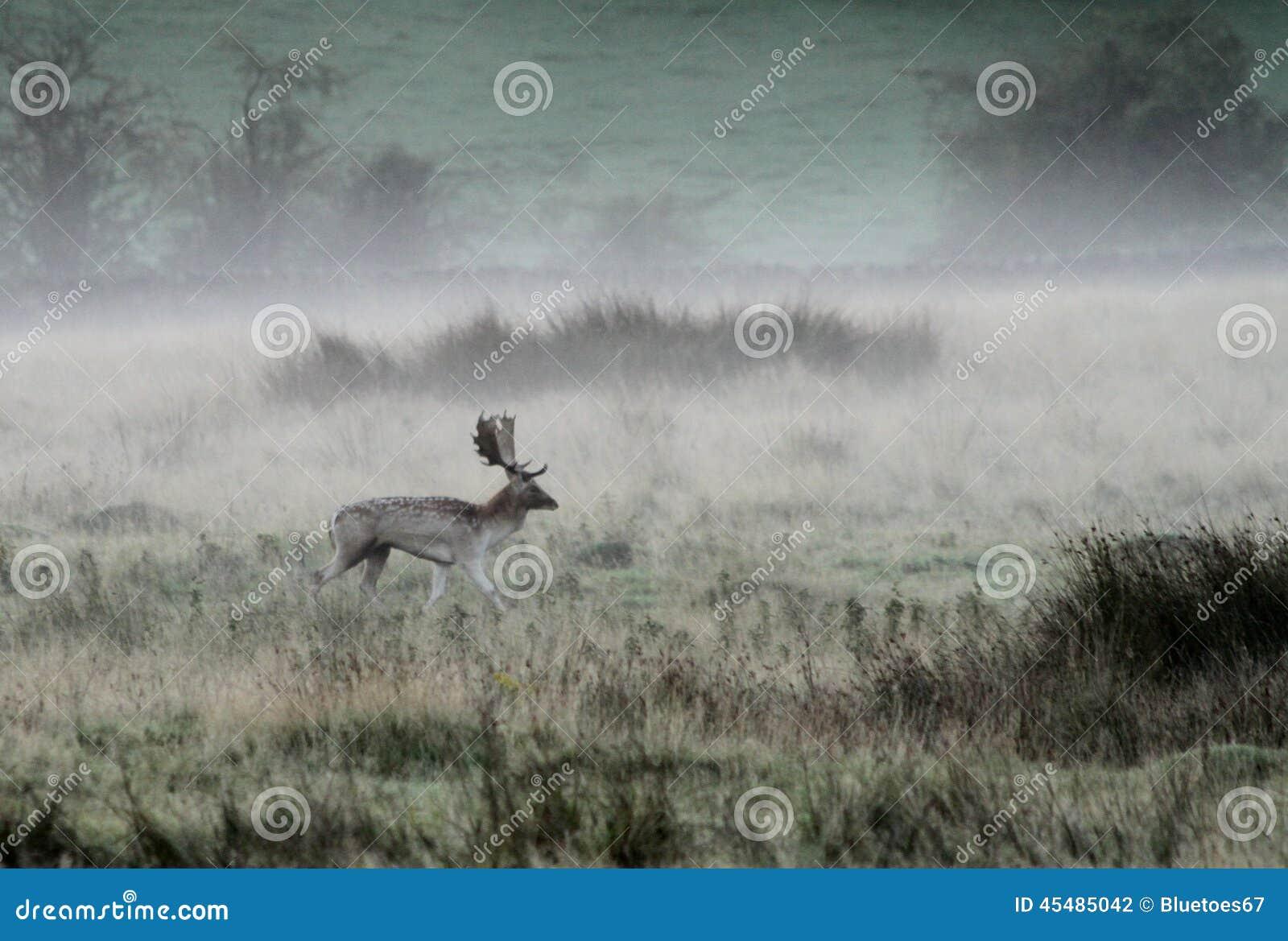 在秋天雾的小鹿雄鹿