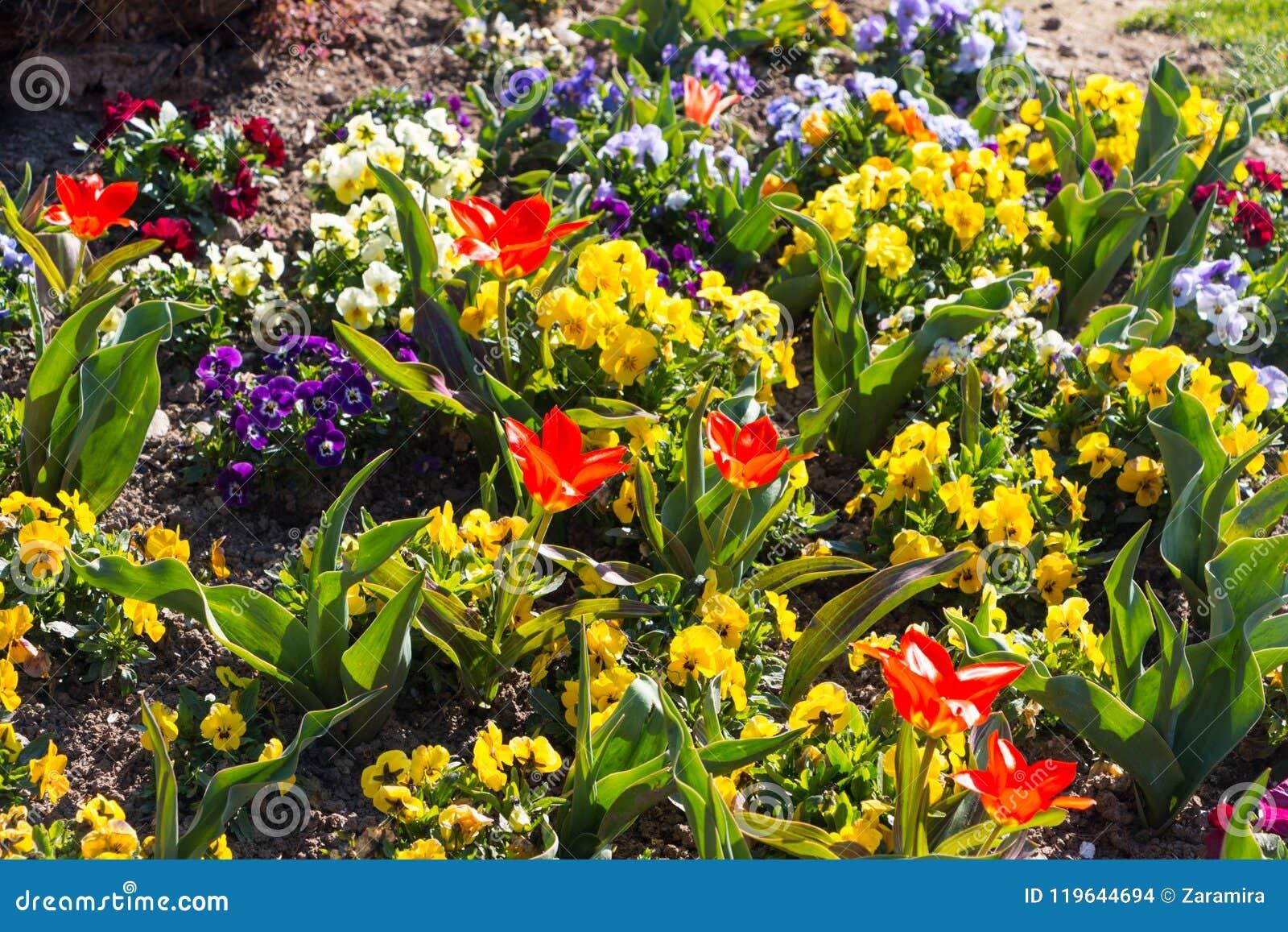 在科莫湖的花