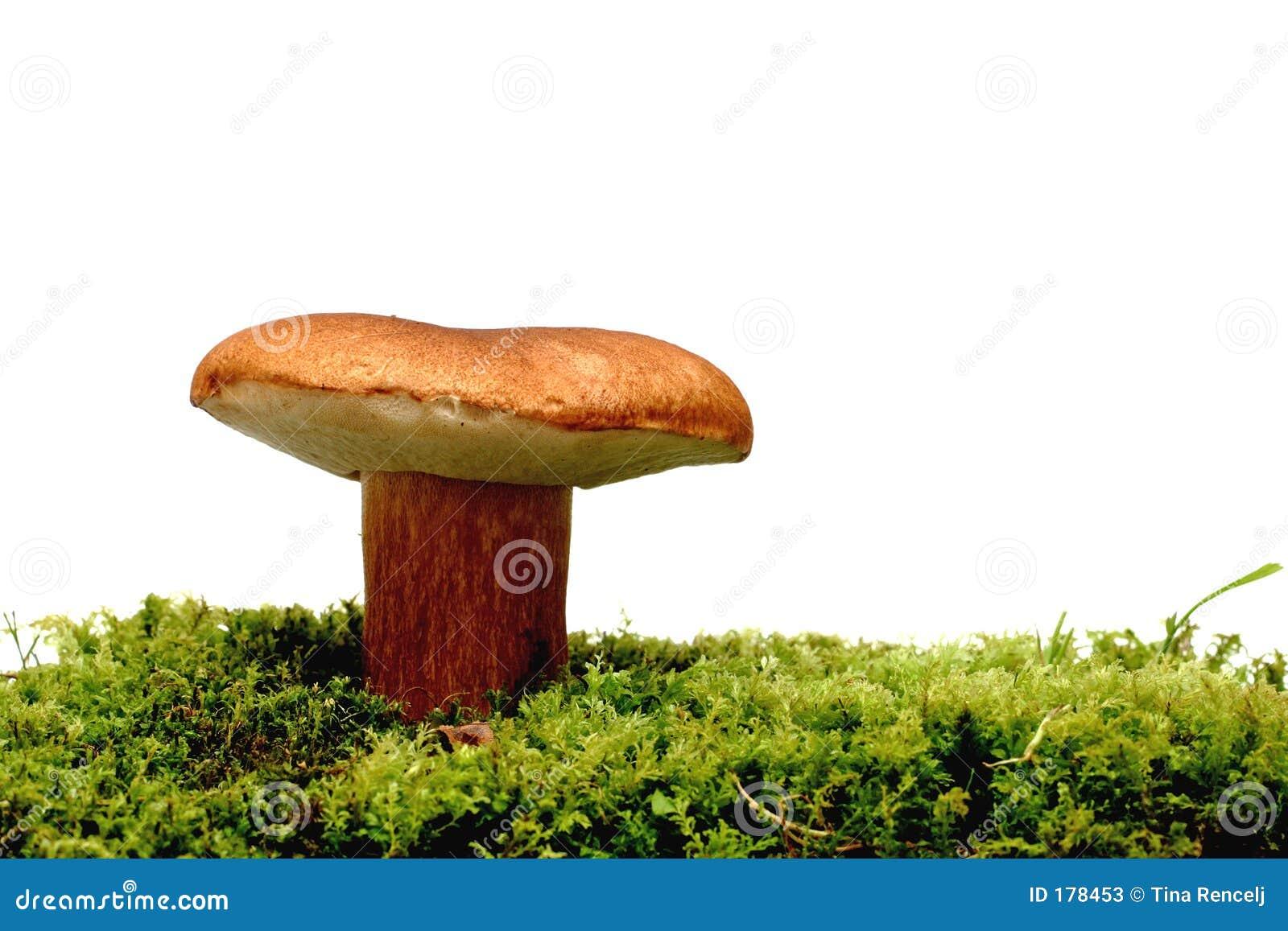 在空白通配的蘑菇