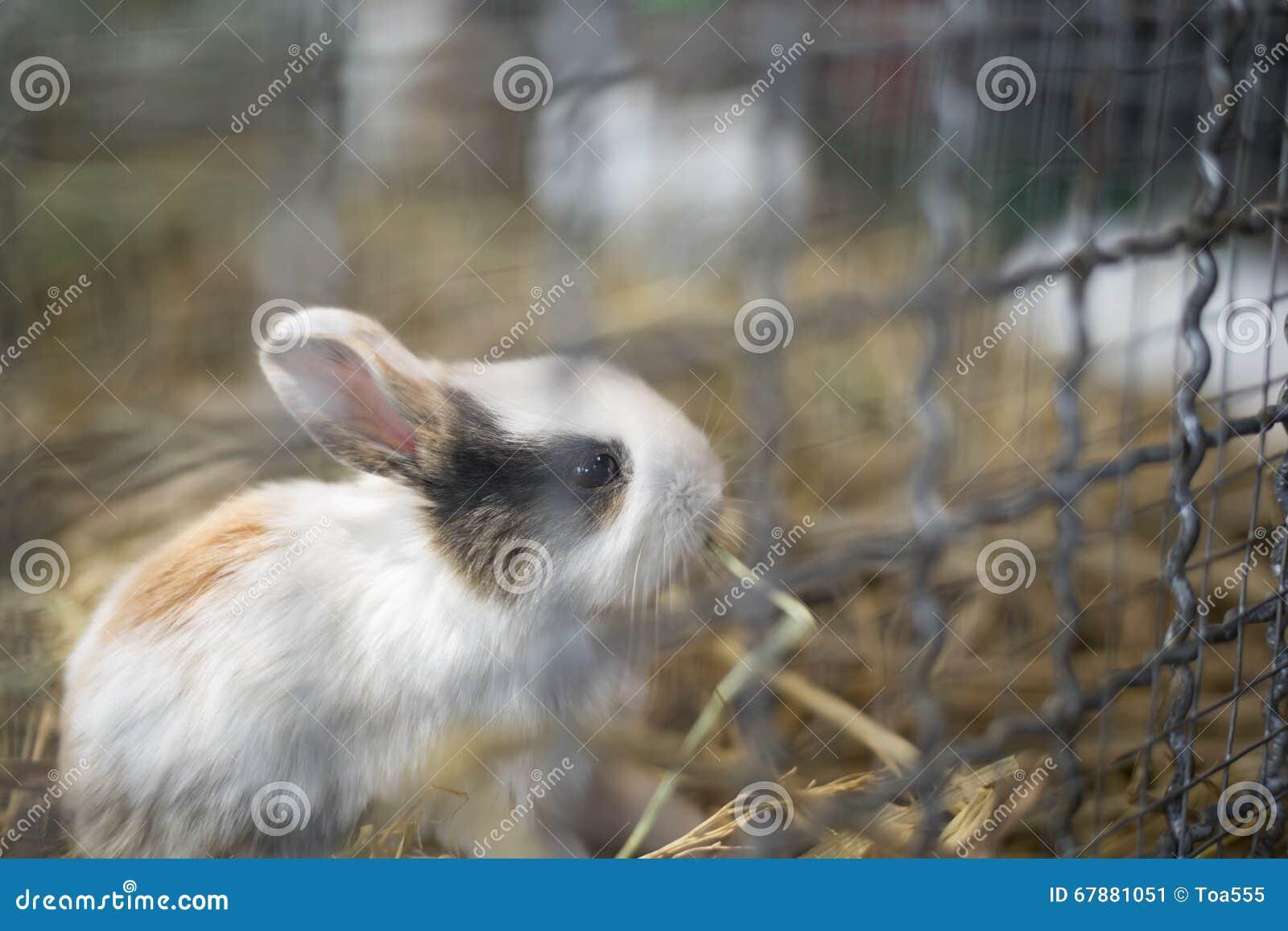 在笼子的小兔子