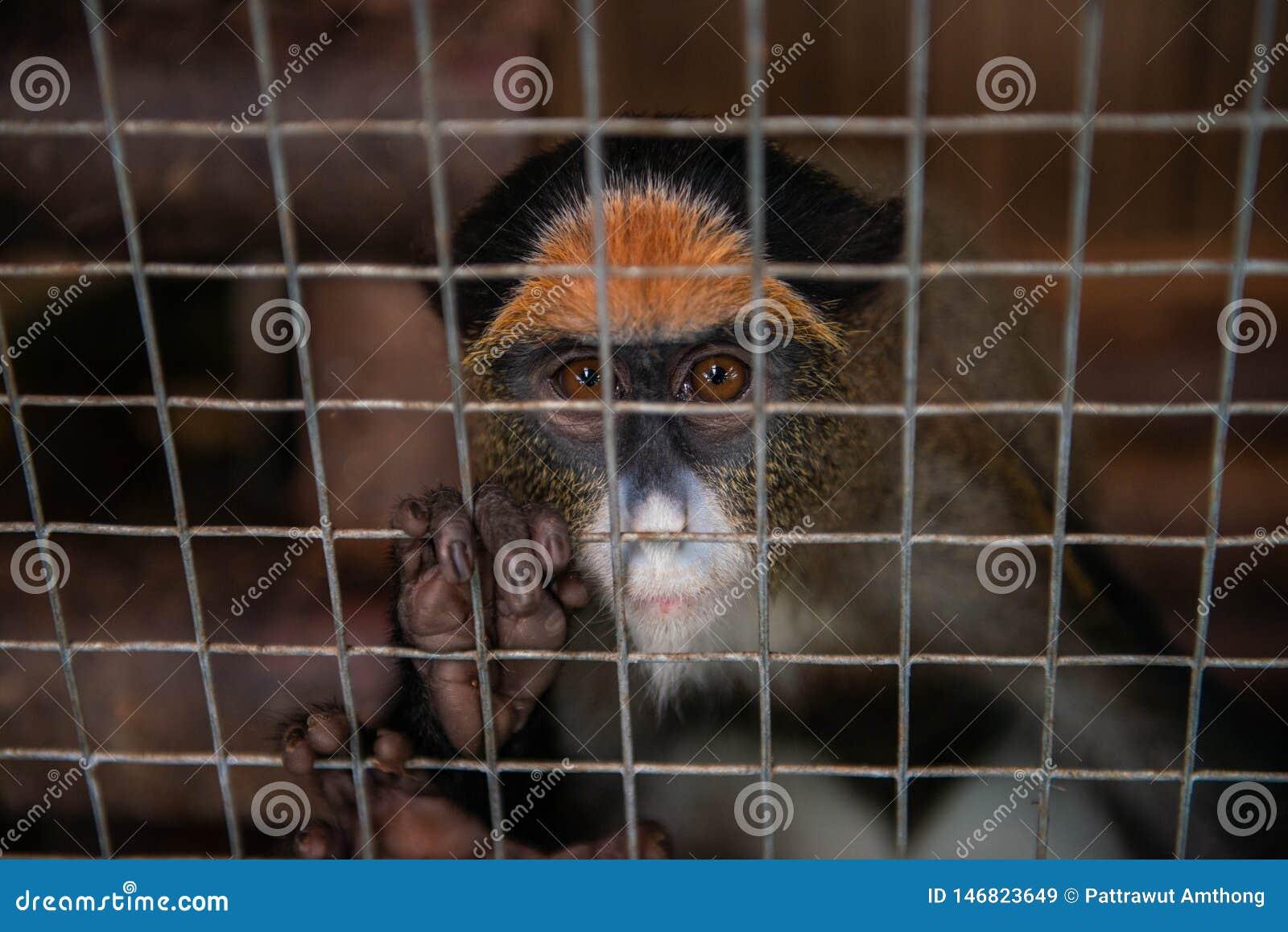 在笼子的猴子