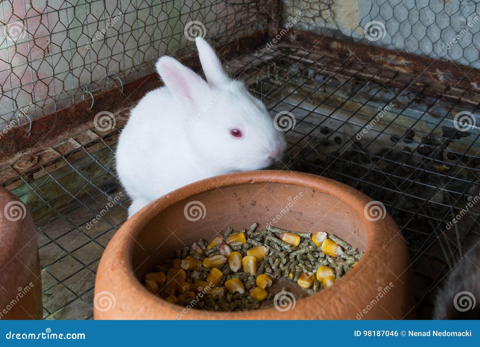 在笼子的白色小兔子