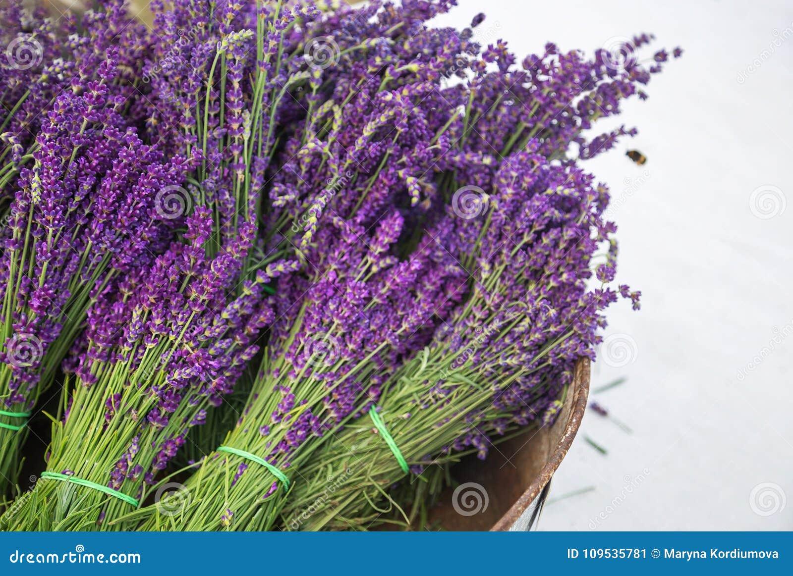 在篮子和蜂的淡紫色花束 淡紫色葡萄酒用新鲜,美丽的紫色淡紫色开花开花