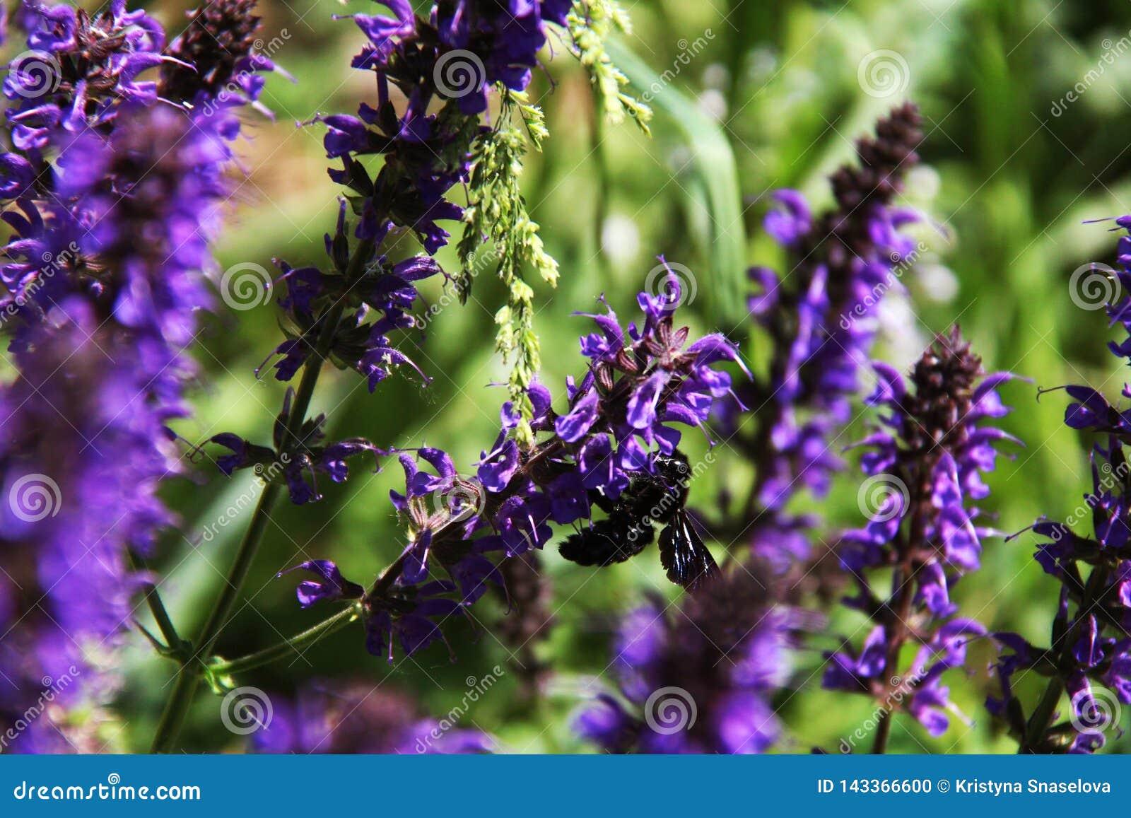 在紫色花的有趣的昆虫