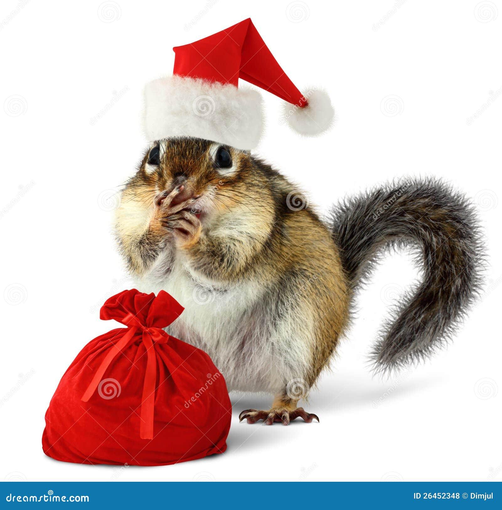 在红色圣诞老人帽子的花栗鼠与圣诞老人袋子