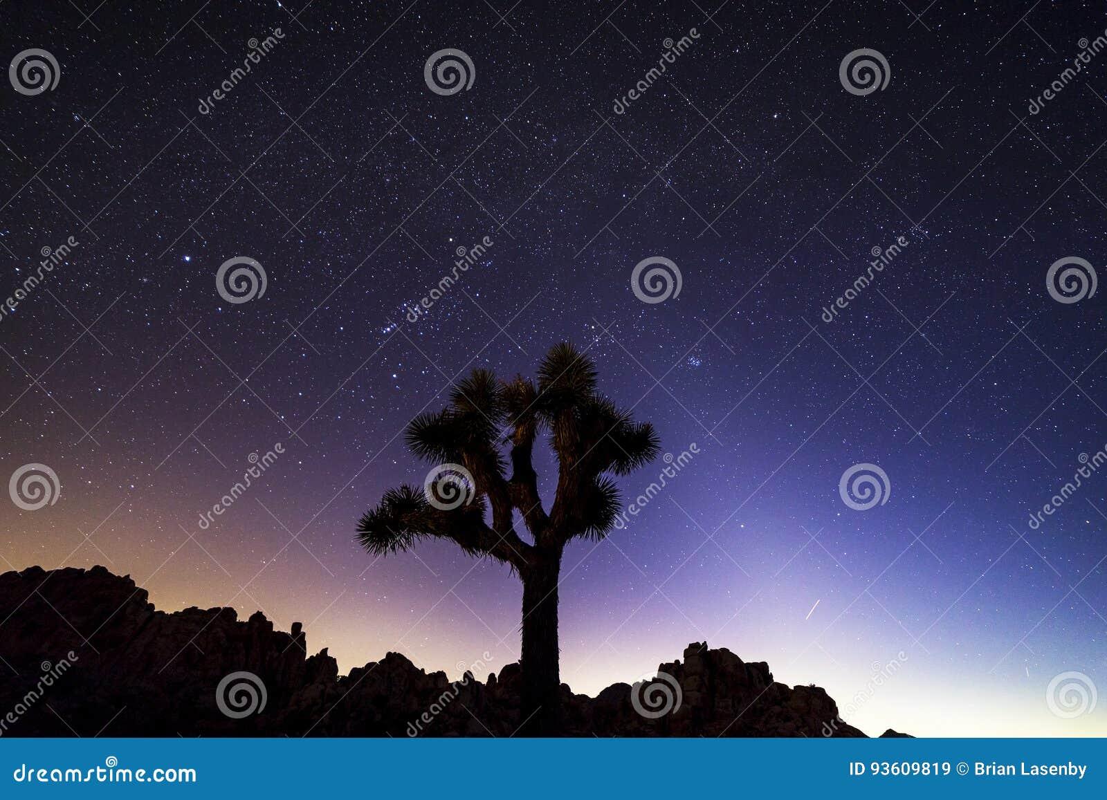 在约书亚树国家公园,加利福尼亚的夜空