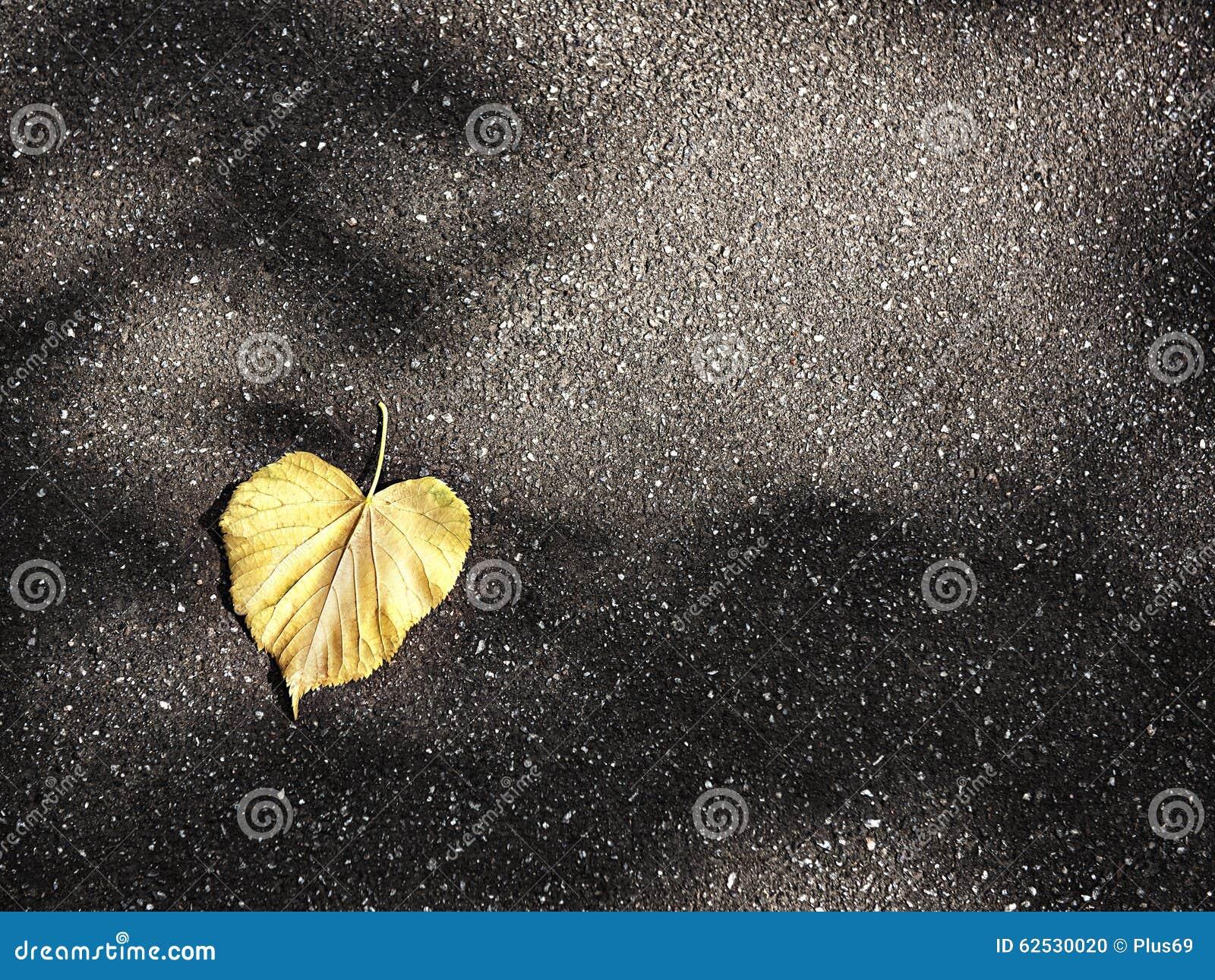 在纯净的沥青的下落的秋叶
