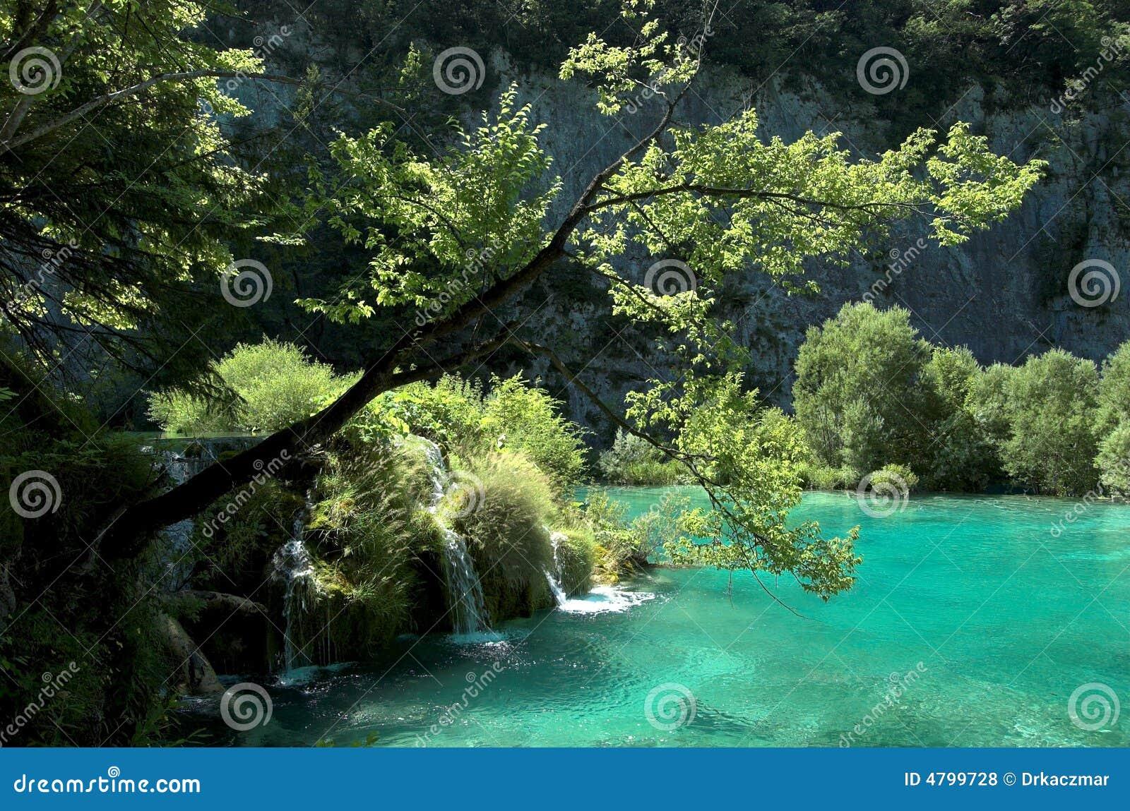 在结构树水的级联