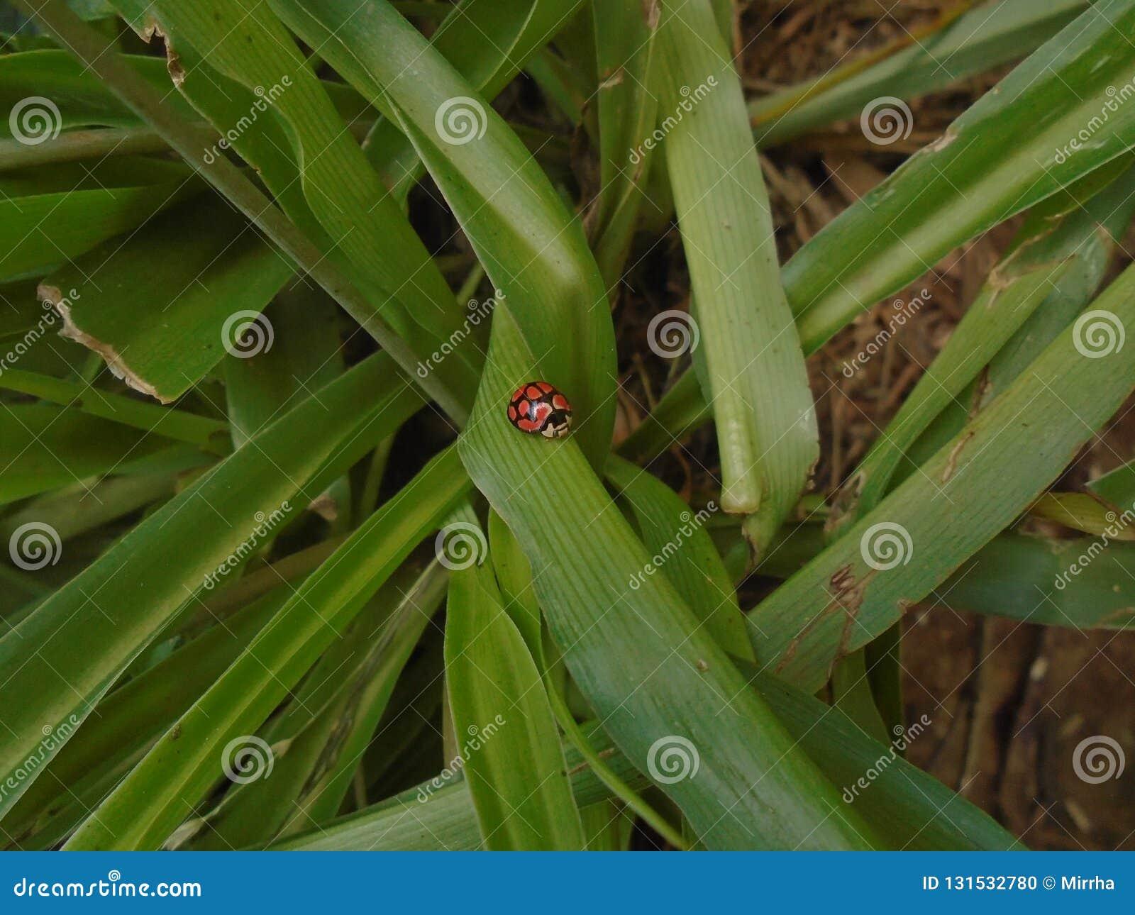 在绿色的一只瓢虫