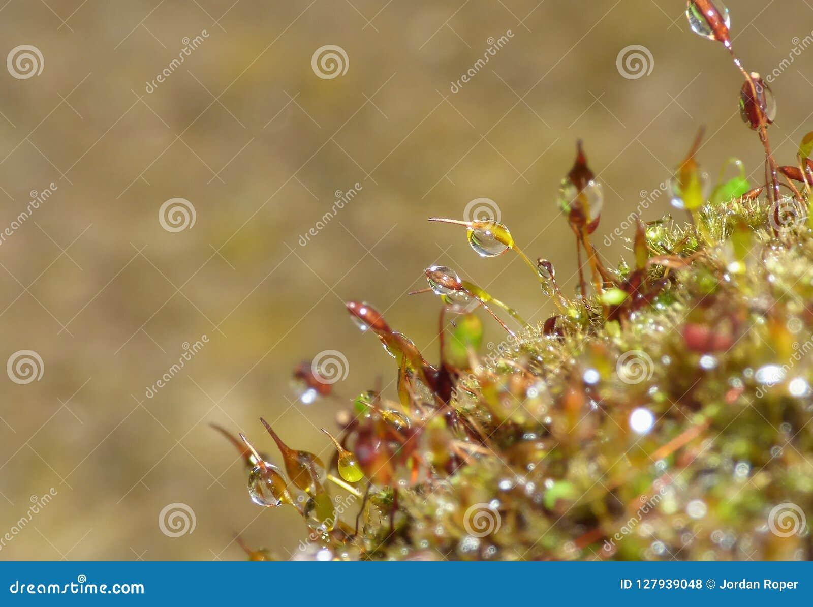 在绿色自然的新青苔和水下落从事园艺-宏观射击
