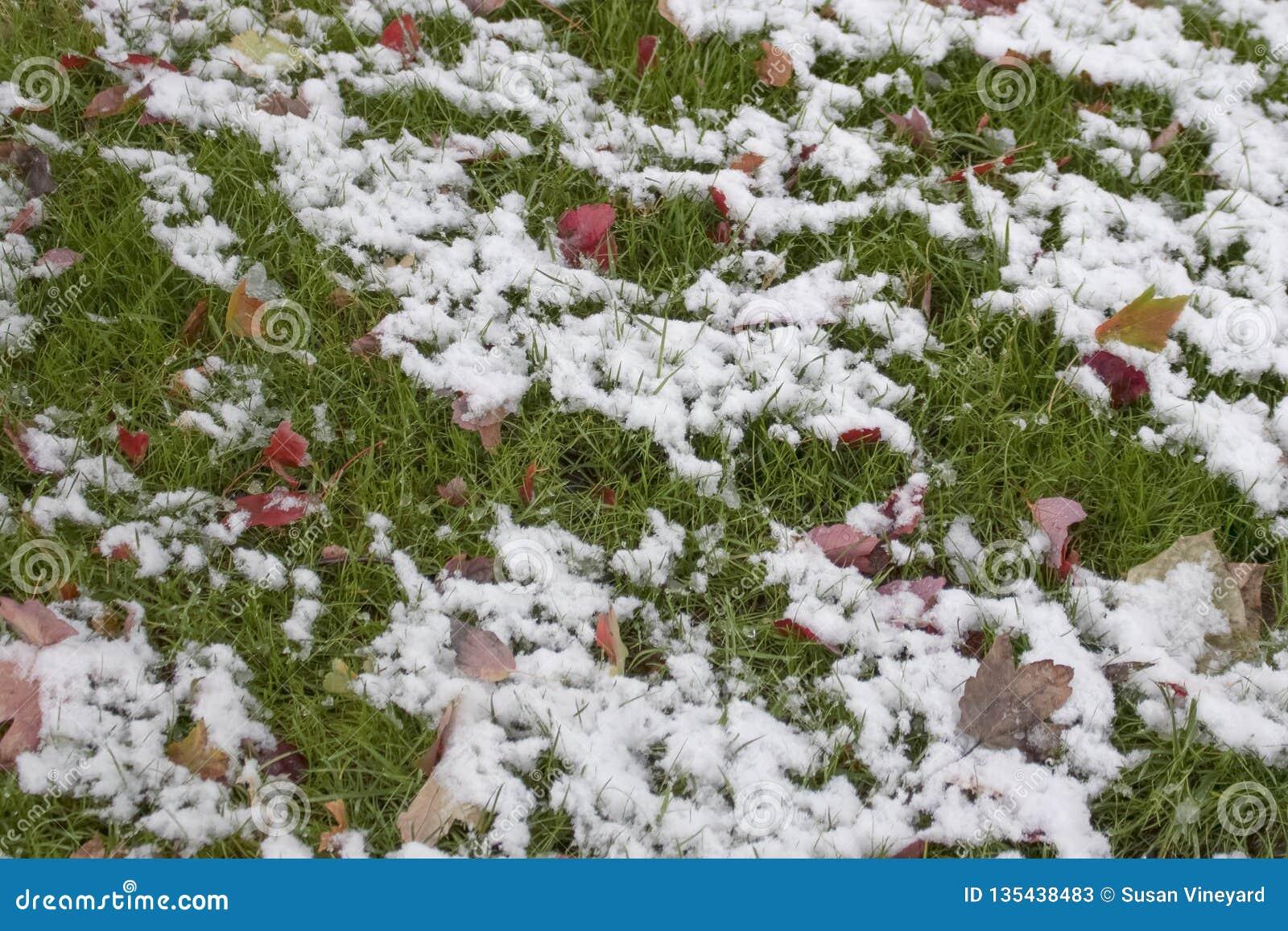 在绿草和明亮地色的秋叶-背景的熔化的雪