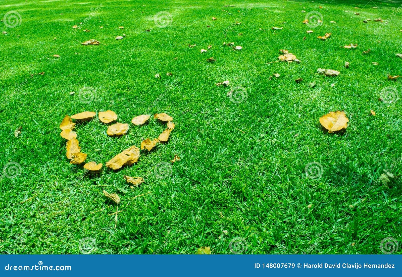 在绿草的心脏 E