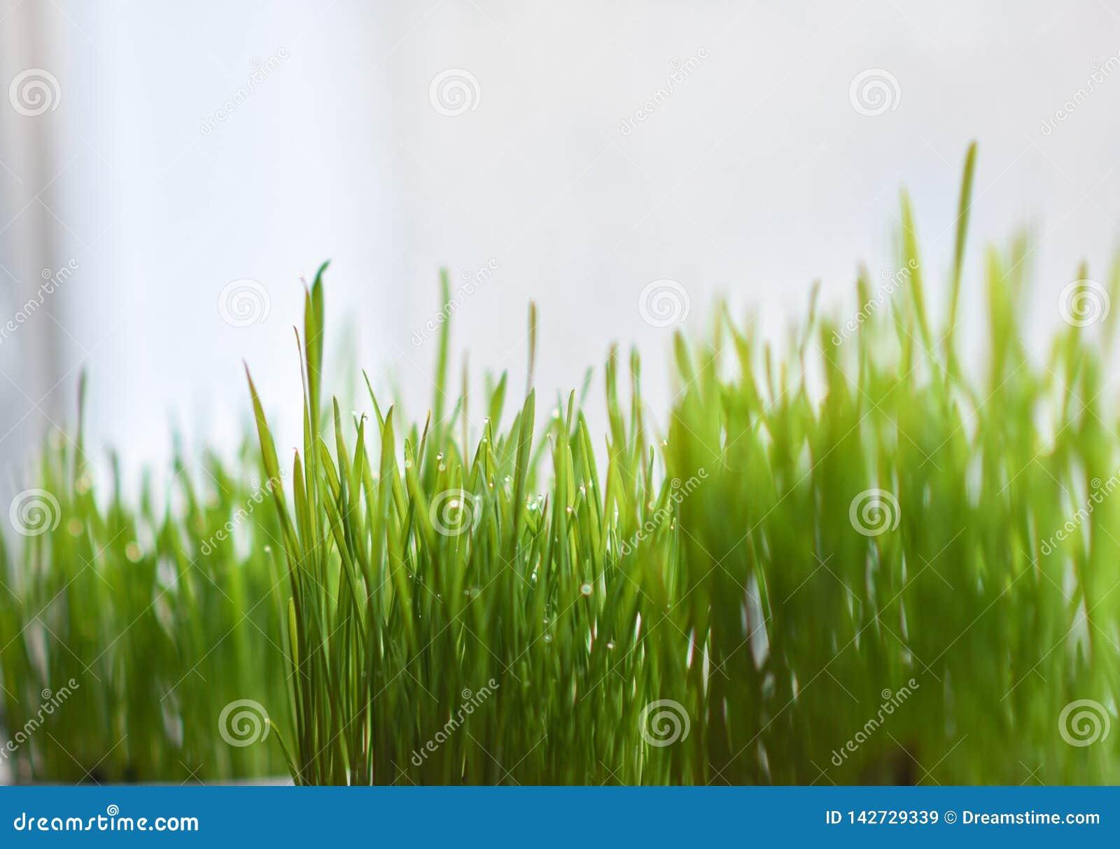 在罐在窗台,复活节彩蛋的绿草